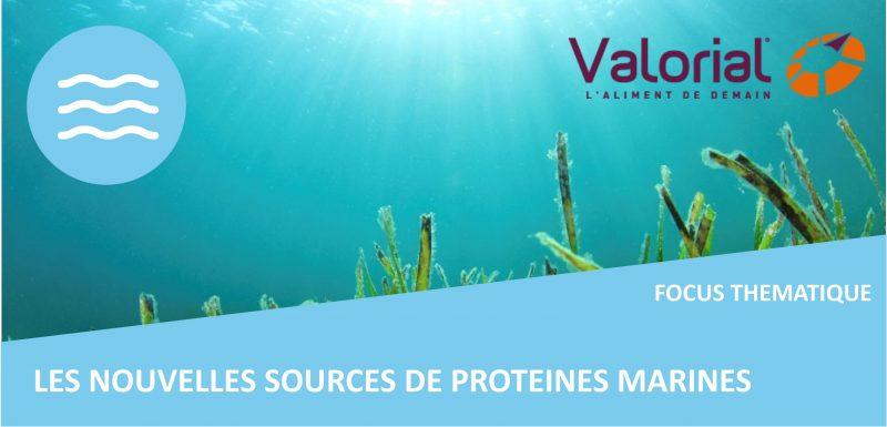 bandeau-focus-proteines-marines-valorial