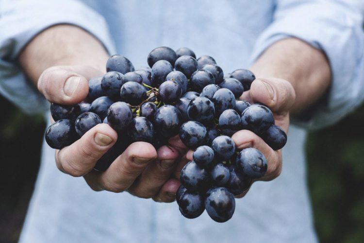 ethique-transparence-alimentation-valorial